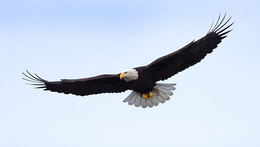 Six Leadership Principles To Learn From An Eagle | Phenomenal Woman